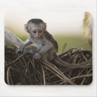 Kenya, Samburu Game Reserve. Vervet Monkey Mouse Pad
