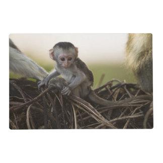 Kenya, Samburu Game Reserve. Vervet Monkey Placemat