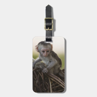 Kenya, Samburu Game Reserve. Vervet Monkey Tag For Luggage