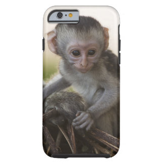 Kenya, Samburu Game Reserve. Vervet Monkey Tough iPhone 6 Case