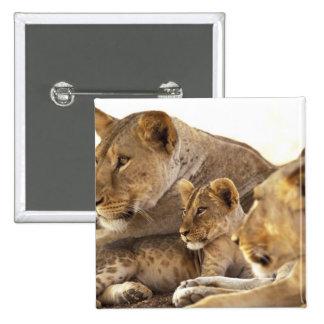 Kenya, Samburu National Game Reserve. Lion cub 2 Pinback Buttons