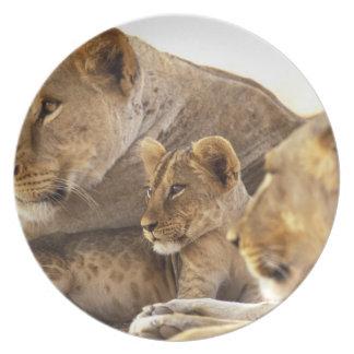 Kenya, Samburu National Game Reserve. Lion cub 2 Melamine Plate