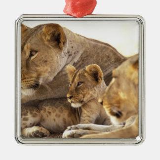 Kenya, Samburu National Game Reserve. Lion cub 2 Metal Ornament