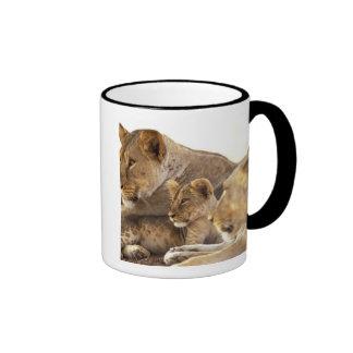 Kenya Samburu National Game Reserve Lion cub 2 Mugs