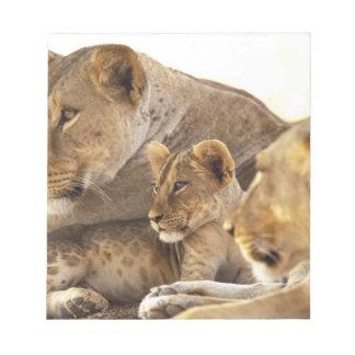 Kenya, Samburu National Game Reserve. Lion cub 2 Notepad