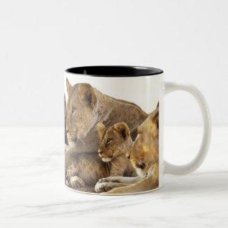 Kenya, Samburu National Game Reserve. Lion cub 2 Two-Tone Coffee Mug