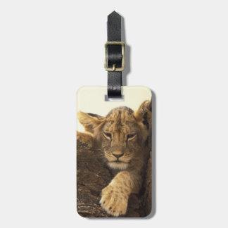 Kenya, Samburu National Game Reserve. Lion cub Bag Tag