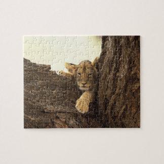 Kenya, Samburu National Game Reserve. Lion cub Jigsaw Puzzles