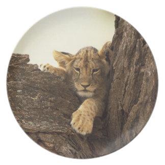 Kenya, Samburu National Game Reserve. Lion cub Melamine Plate