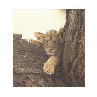 Kenya, Samburu National Game Reserve. Lion cub Notepad