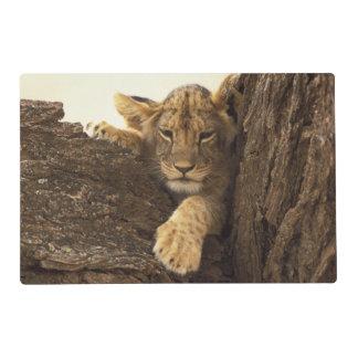 Kenya, Samburu National Game Reserve. Lion cub Placemat