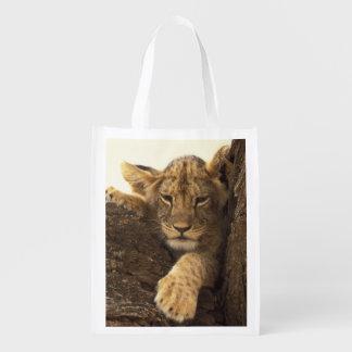 Kenya, Samburu National Game Reserve. Lion cub Grocery Bags