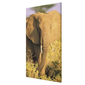 Kenya, Samburu National Reserve. African Canvas Print