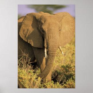 Kenya, Samburu National Reserve. African Poster