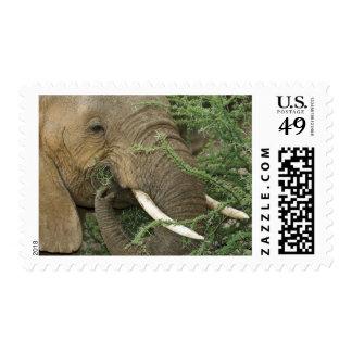 Kenya, Samburu National Reserve. Close-up of Postage Stamp