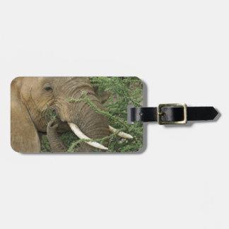 Kenya, Samburu National Reserve. Close-up of Tag For Luggage