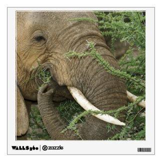Kenya, Samburu National Reserve. Close-up of Wall Sticker