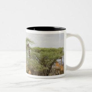 Kenya, Samburu National Reserve. Rothschild Two-Tone Coffee Mug