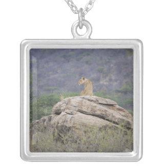Kenya, Samburu Nature Reserve, female lion on Silver Plated Necklace