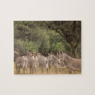 Kenya: Shaba National Reserve, herd of Grevy's Jigsaw Puzzle