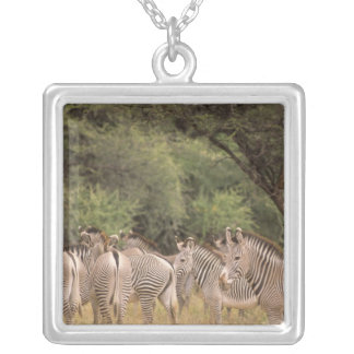 Kenya: Shaba National Reserve, herd of Grevy's Silver Plated Necklace