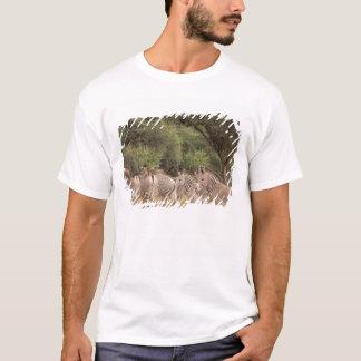 Kenya: Shaba National Reserve, herd of Grevy's T-Shirt