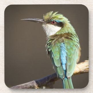 Kenya. Somali bee-eater bird on limb. Credit as: Beverage Coaster