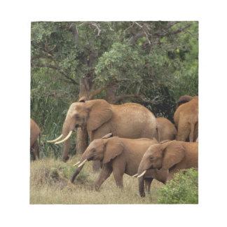 Kenya: Tsavo East National Park, herd African Notepad