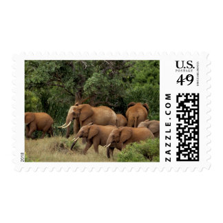 Kenya: Tsavo East National Park, herd African Stamp