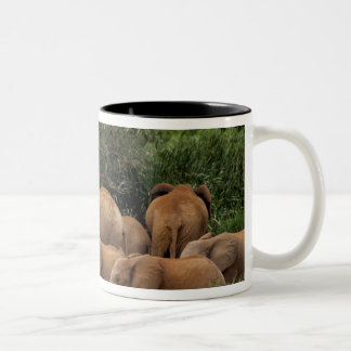 Kenya: Tsavo East National Park, herd African Two-Tone Coffee Mug