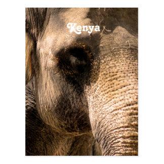 Kenyan Elephants Postcard