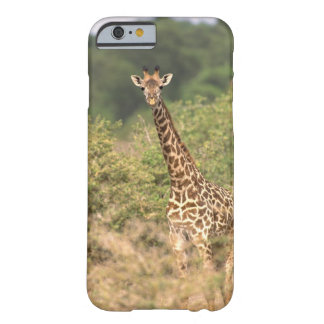 Kenyan giraffe barely there iPhone 6 case