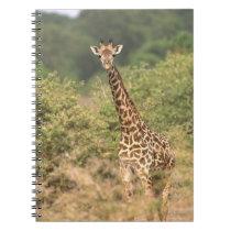 Kenyan giraffe notebook