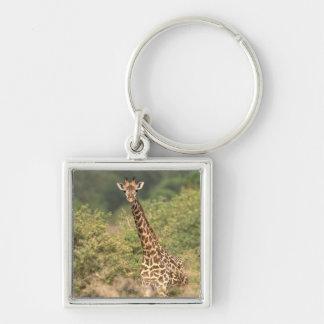 Kenyan giraffe Silver-Colored square keychain