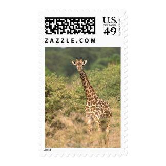 Kenyan giraffe stamp