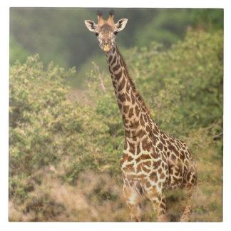 Kenyan giraffe ceramic tile