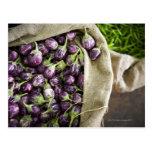 Kerelan Eggplant Postcard