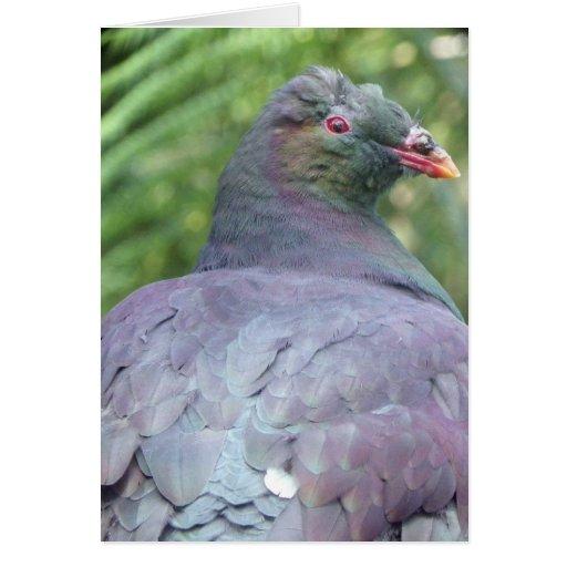 Kereru Closeup Cards
