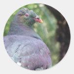 Kereru Closeup Round Sticker