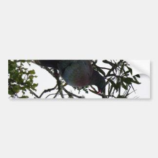 Kereru (Native Wood Pigeon) Bumper Sticker