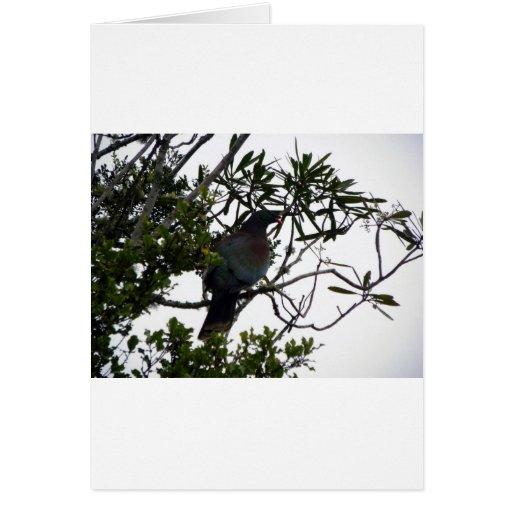 Kereru (Native Wood Pigeon) Card