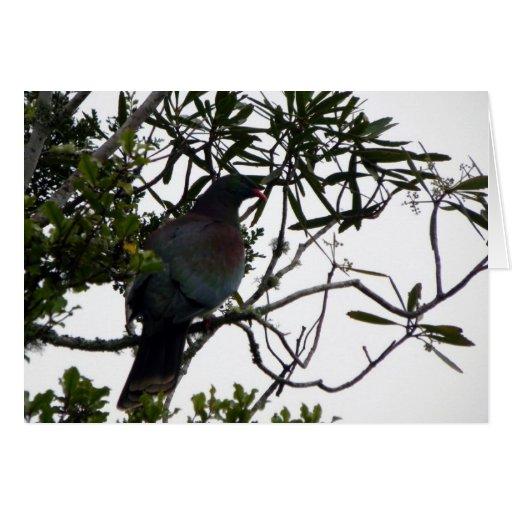 Kereru (Native Wood Pigeon) Greeting Card
