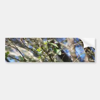 Kereru Plucking Leaf Bumper Sticker