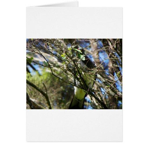Kereru Plucking Leaf Card