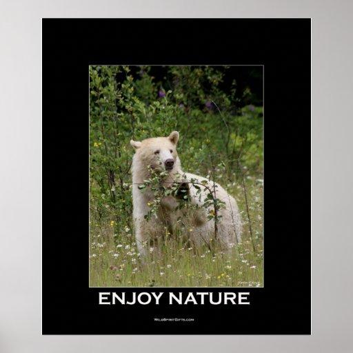 Kermode Bear Motivational Poster