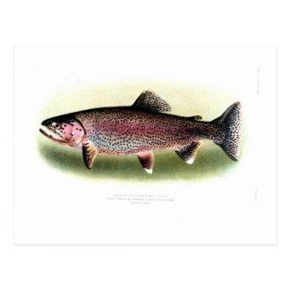 Kern River Trout Postcard