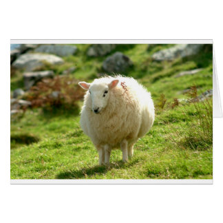 Kerry Sheep on Ring of Kerry Card