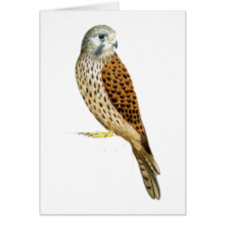 Kestrel 2011 card