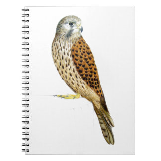 Kestrel 2011 notebooks