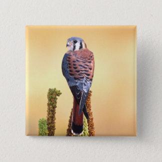 Kestrel, Falco sparverius, Native to US & Canada Button